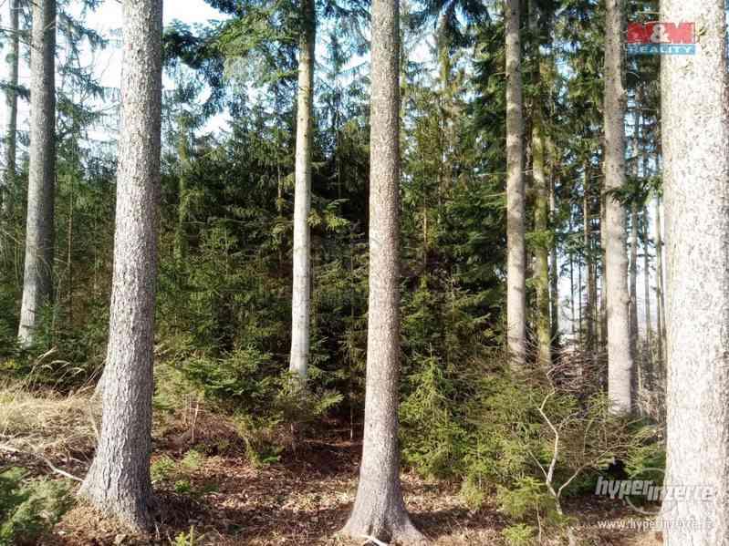 Prodej lesa, 103591 m?, Doudleby nad Orlicí - foto 9