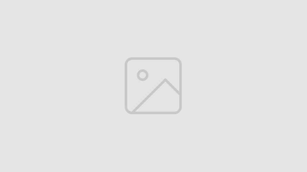 Štěňátka yorkshirského teriéra.