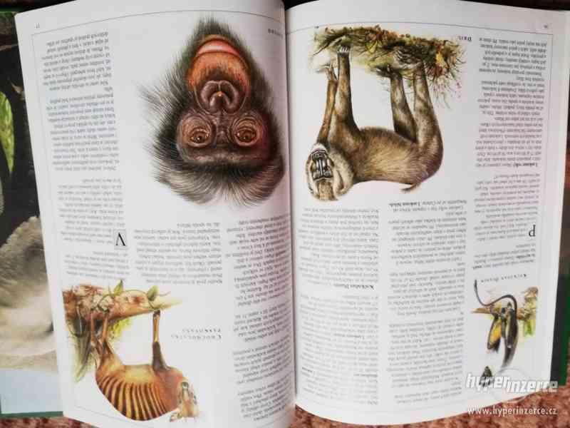Knihy - sada dětských encyklopedií (i jednotlivě) - foto 12