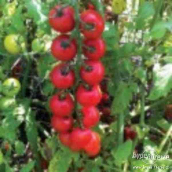 Rajče Nectar AV - semena