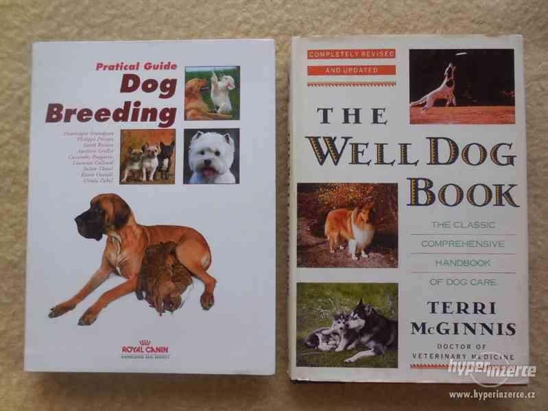 Chov a péče o psy - v angličtině.