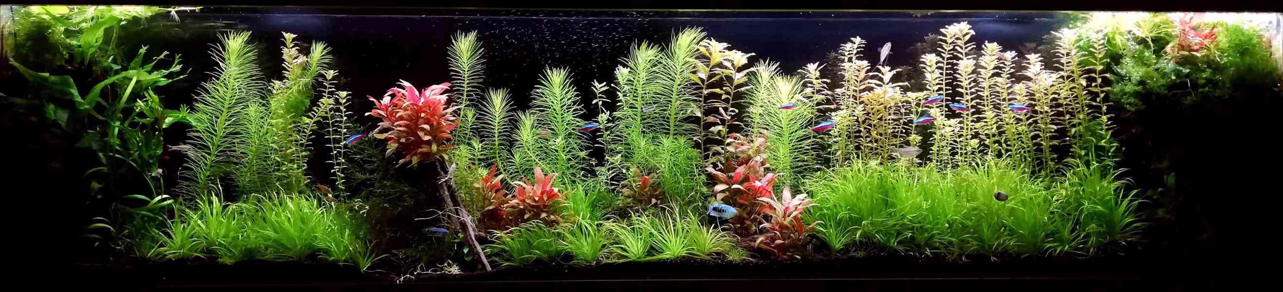 Akvarijní rostliny - Pravidelný prostřih z tohoto akvária