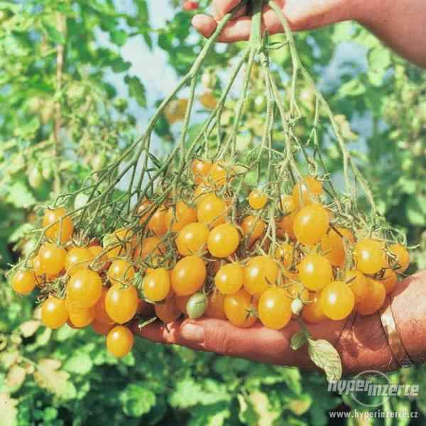 Rajče Ildi - semena
